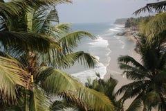 Palma krajobraz Obrazy Royalty Free