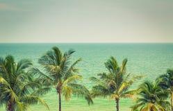 Palma (l'immagine filtrata ha elaborato vi Immagine Stock