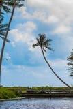 Palma, lagoa e grama Imagem de Stock