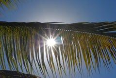 palma liści Obraz Stock