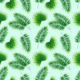 Palma liści bezszwowy wzór powtórki tropikalny tło szablon greenary tapeta Graficzny projekt z Phoenix ilustracji