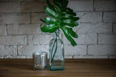 Palma liści stojak w zielonej wazie na drewnianej półce zdjęcie stock