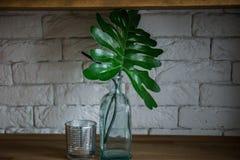 Palma liści stojak w zielonej wazie na drewnianej półce fotografia royalty free
