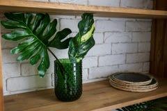 Palma liści stojak w zielonej wazie na drewnianej półce obrazy royalty free