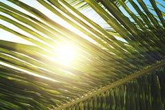 Palma liście na niebieskiego nieba tle weekendowych wakacji pojęcia tropikalny plażowy backgroundPalm opuszcza na niebieskiego ni obraz royalty free