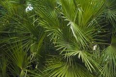 Palma liście przerastający z tłem obrazy stock