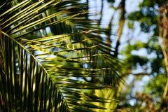 Palma liście przy światłem słonecznym Zdjęcie Royalty Free