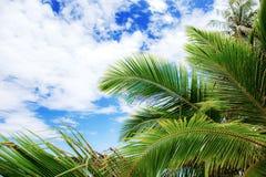 Palma liście przy niebem zdjęcie royalty free
