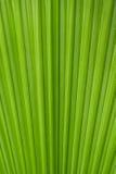 palma liści, Zdjęcie Royalty Free