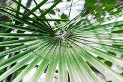 Palma liści projekt w tropikalnym lesie fotografia royalty free