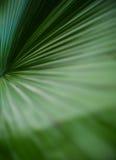Palma liścia zielona tekstura Zdjęcia Royalty Free