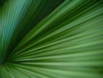 Palma liścia zielona tekstura Obraz Stock
