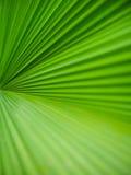 Palma liścia zielona tekstura Obrazy Royalty Free