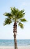 Palma, mare, cielo fotografia stock libera da diritti