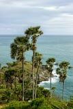 Palma, mare, vista Immagini Stock