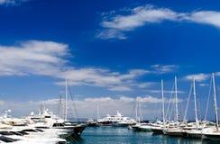 Palma marina Stock Image