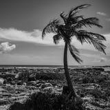Palma monocromática no paraíso fotografia de stock royalty free