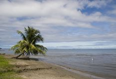 Palma na costa Imagem de Stock
