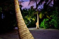 Palma na noite Foto de Stock
