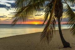 palma na plaży Zdjęcie Stock