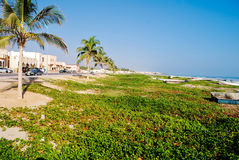 palma na plaży Zdjęcia Royalty Free