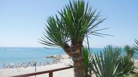 Palma na praia vídeos de arquivo