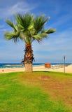 Palma na praia. Foto de Stock