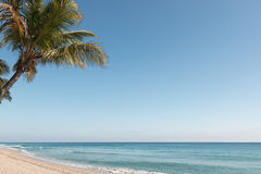 Palma na praia fotografia de stock
