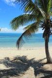 Palma na praia Imagem de Stock Royalty Free