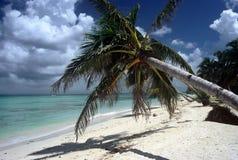Palma na praia branca, Madadascar imagem de stock