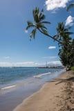 A palma na praia, Maui Foto de Stock