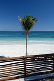Palma na praia tropical Fotografia de Stock