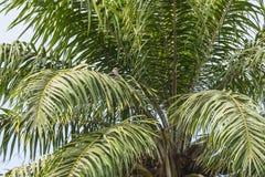 Palma na selva imagens de stock royalty free