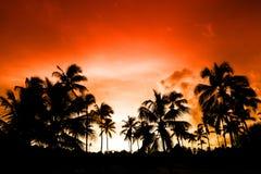 Palma negra en la playa de la noche Fotografía de archivo libre de regalías