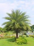 Palma nel giardino Fotografie Stock Libere da Diritti
