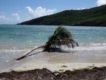 Palma nel mare. Fotografia Stock