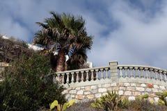 Palma nel Mediterraneo Immagine Stock Libera da Diritti