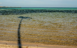Palma nell'acqua Fotografia Stock