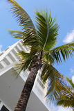 Palma nella città di Miami fotografie stock libere da diritti