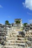 Palma nelle rovine Fotografie Stock
