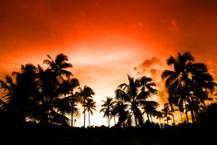 Palma nera sulla spiaggia di notte Fotografia Stock Libera da Diritti