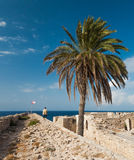 Palma no castelo medieval no porto velho em Kyrenia, Chipre Foto de Stock Royalty Free