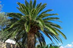 Palma no fundo do céu azul imagens de stock royalty free