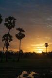Palma no por do sol Imagens de Stock