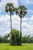 Palma, nubes y cielo de azúcar en el fondo Imágenes de archivo libres de regalías