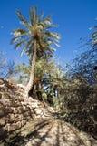 Palma in oasi Fotografia Stock