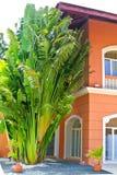 Palma obok domu Zdjęcia Stock