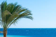 palma oceanu Zdjęcia Royalty Free