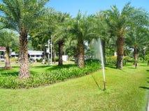 Palma ogród Zdjęcia Stock