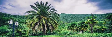 Palma ogród botaniczny obraz royalty free